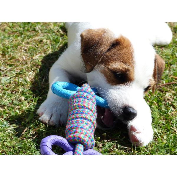Petface Little Petface Puppys